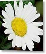 A Daisy If You-do Metal Print