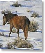 A Day In The Life Of  A Wild Horse  Metal Print by Jeanne  Bencich-Nations
