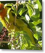 A Day With Mr. Tanager 13 Metal Print