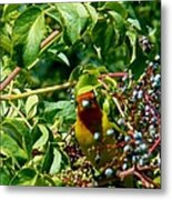 A Day With Mr. Tanager 2 Metal Print