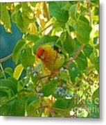 A Day With Mr. Tanager 5 Metal Print