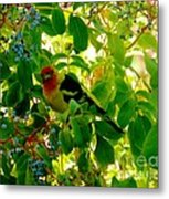 A Day With Mr. Tanager 8 Metal Print