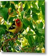 A Day With Mr. Tanager 9 Metal Print