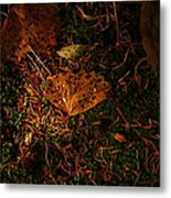 A Dew Covered Death Metal Print