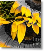 A Different Kind Of Sunflower Metal Print