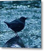 A Dipper On A Rock Metal Print