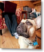 A Dog Stands At The Feet Of Its Owner Metal Print