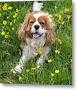 A Dog's Buttercup Heaven Metal Print by Jo Collins