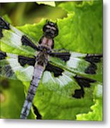 A Dragonfly Warms Up In A Vegetable Metal Print