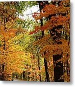 A Drive Through The Woods Metal Print