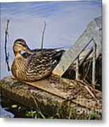 A Duck With Style Metal Print