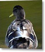 A Duck's Tale Metal Print