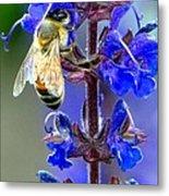 A European Honey Bee And It's Flowers Metal Print