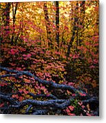 A Fall Forest  Metal Print