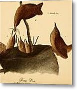 A Family Of House Wrens Metal Print