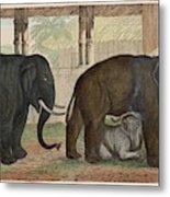 A Family Of Indian Elephants Metal Print