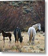 A Family Of Three - Wild Horses - Green Mountain - Wyoming Metal Print