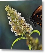 A Feast Of Nectar Metal Print