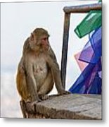 A Female Macaque On Top Of Wall Metal Print