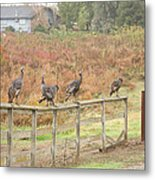 A Fence Line Of Fall Turkeys Metal Print