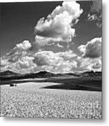 A Field Of Wheat. Limagne. Auvergne. France Metal Print