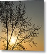 A Filigree Of Branches Framing The Sunrise Metal Print