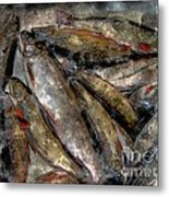 A Fine Catch Of Trout - Steel Engraving Metal Print