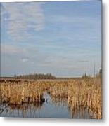 A Fine Place For Ducks Metal Print