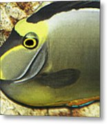 A Fish From The Ocean Metal Print
