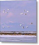 A Flock Of Swans Flies Over Water Metal Print