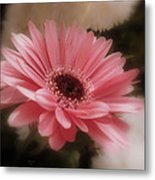 A Flower For Brooke Metal Print