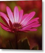 A Flower In A Shadow  Metal Print