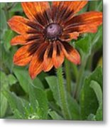A Flower Within A Flower Metal Print