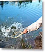 A Fly Fisherman Pulls A Fish Metal Print