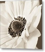 A Focus On The Details Metal Print by Caitlyn  Grasso
