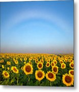 A Fog Bow Over The Colorado Sunflower Fields Metal Print