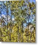 A Forest Glade Metal Print