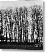 A Forest Of Trees Metal Print