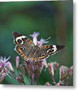 A Friendly Butterfly Smile Metal Print