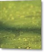 A Frog In Pond Muck Metal Print