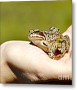 A Frog In The Hand Metal Print
