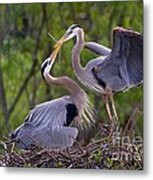 A Gift For The Nest Metal Print