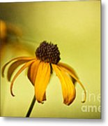 A Gift From August Metal Print by Lois Bryan