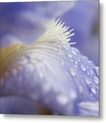 A Glimpse Of Beauty Metal Print
