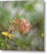 A Glimpse Of Spring To Come Metal Print