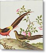 A Golden Pheasant Metal Print