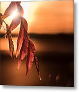 A Golden Touch... Metal Print