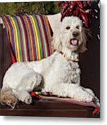 A Goldendoodle Lying On A Garden Bench Metal Print