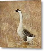 A Goose Is A Goose Metal Print by Betty LaRue