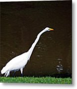 A Great Egret On Hilton Head Island Metal Print